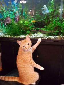 Archer Memory Care Centre - cat