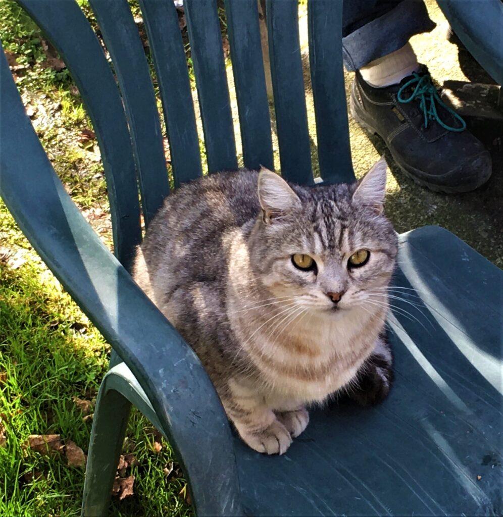 Archie - Archer's cat